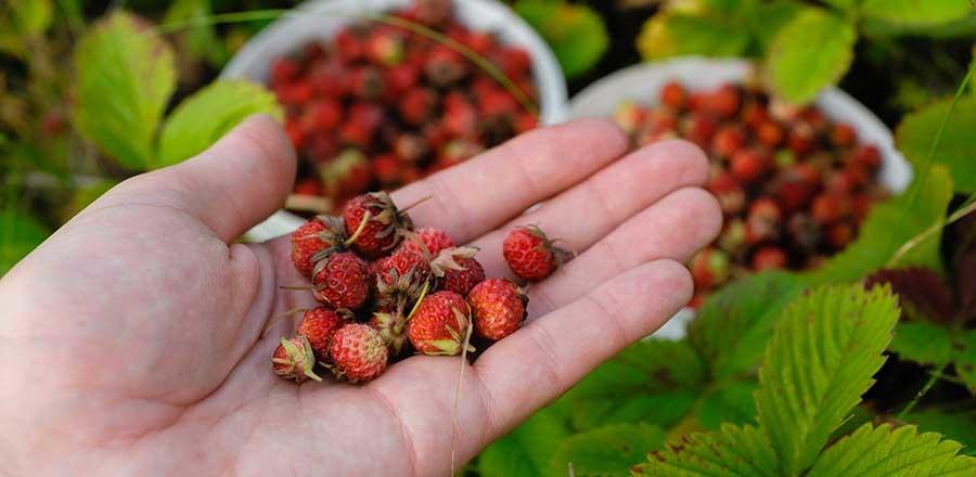 Früchte aus dem eigenen Garten genießen